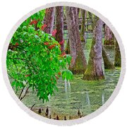 Bald Cypress And Red Buckeye Tree At Mile 122 Of Natchez Trace Parkway-mississippi Round Beach Towel