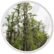 Bald Cypress - Axodium Distichum Round Beach Towel