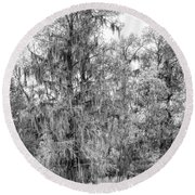 Bald Cypress Swamp In Black And White Round Beach Towel