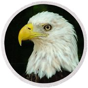 Bald Eagle-42 Round Beach Towel