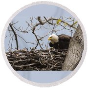 Bald Eagle And Eaglet Round Beach Towel