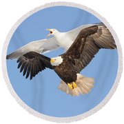 Bald Eagle And Greater Black-backed Gull Round Beach Towel