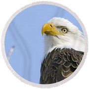 Bald Eagle Close Up Round Beach Towel