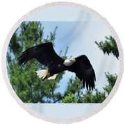Bald Eagle Feeding 2 Round Beach Towel
