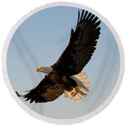 Bald Eagle Flying With Fish In Its Talons Round Beach Towel by Stephen J Krasemann