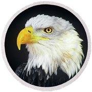 Bald Eagle Hailaeetus Leucocephalus Wildlife Rescue Round Beach Towel