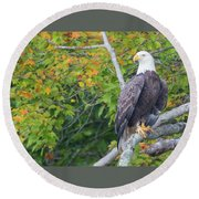 Bald Eagle In Fall Colors Animals Round Beach Towel