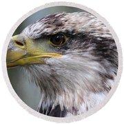 Bald Eagle - Juvenile - Profile Round Beach Towel