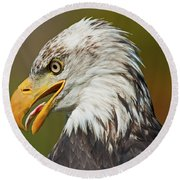 Bald Eagle... Round Beach Towel