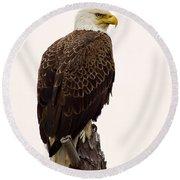 Bald Eagle On A Snag Round Beach Towel