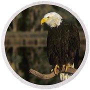 Bald Eagle On Dead Snag Wildlife Rescue Round Beach Towel