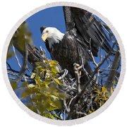 Bald Eagle On Nest Near The Oxbow Round Beach Towel