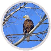 Bald Eagle Perched Round Beach Towel