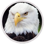 Bald Eagle - Power And Poise 02 Round Beach Towel
