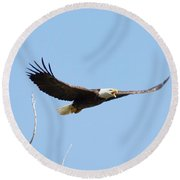 Bald Eagle Soaring Over The Trees Round Beach Towel