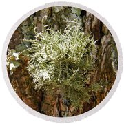 Ball Of Moss Round Beach Towel