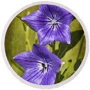 Balloon Flower Round Beach Towel by Marcia Colelli