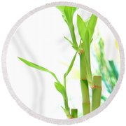 Bamboo Stems And Leaves Round Beach Towel