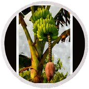 Banana Trees With Fruits And Flower In Lush Tropical Garden Round Beach Towel