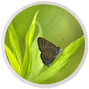 Banded Hairstreak Butterfly Resting On Green Leaf Round Beach Towel