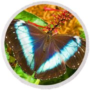 Banded Morpho Butterfly Round Beach Towel