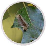 Banded Tussock Moth Caterpillar Round Beach Towel
