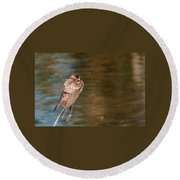 Bank Swallow Resting Round Beach Towel