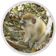Barbados Green Monkey Round Beach Towel