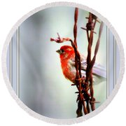 Barbed Wire And Finch Round Beach Towel