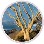 Bare Tree On The Spit Round Beach Towel