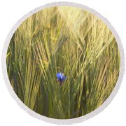Barley And Corn Flowers In The Field Round Beach Towel