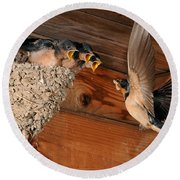 Barn Swallow Nest Round Beach Towel