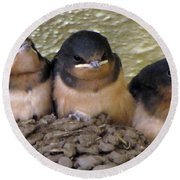Barn Swallows 1 Round Beach Towel