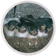 Barn Swallows Round Beach Towel by Hans Reinhard