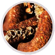 Barnacles And Rust  Round Beach Towel