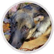 Baron In The Leaves Round Beach Towel