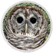 Barred Owl 1 Round Beach Towel