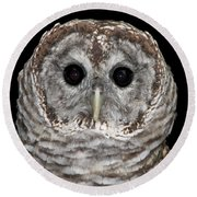 Barred Owl 3 Round Beach Towel