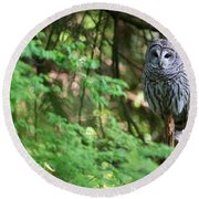 Barred Owl In Forest Round Beach Towel