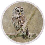Barred Owl Portrait Round Beach Towel