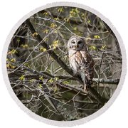 Barred Owl Square Round Beach Towel