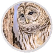 Barred Owl Watch Round Beach Towel