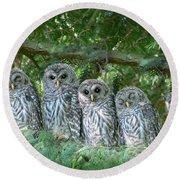 Barred Owlets Nursery Round Beach Towel by Jennie Marie Schell
