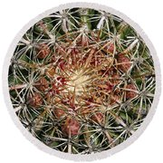 Barrel Cactus Round Beach Towel