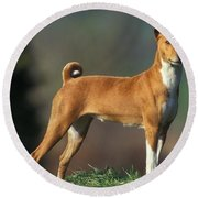 Basenji Dog Round Beach Towel