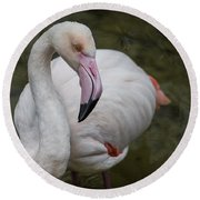 Bashful And Shy Flamingo. Round Beach Towel