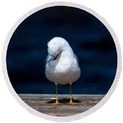 Bashful Seagull  Round Beach Towel