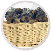 Basket Of Yorkies Round Beach Towel