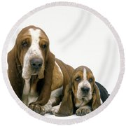 Basset Hound Dogs Round Beach Towel