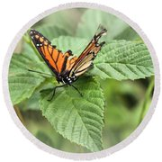 Battered Butterfly Round Beach Towel